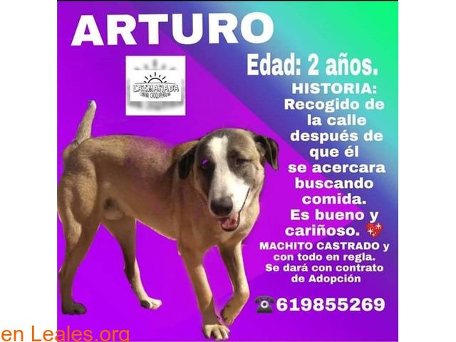 ARTURO busca adopcion - 1