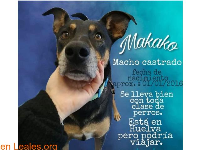 MAKAKO necesita adopcion
