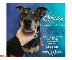 MAKAKO necesita adopcion - Imagen 1