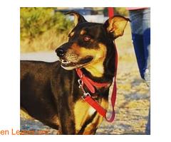 MAKAKO necesita adopcion - Imagen 2