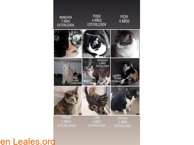 Desahucio de 17 gatos en 6 semanas