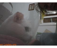 ver foto - Imagen 4