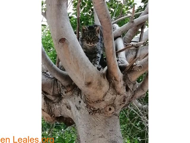 Gato macho desde mitad de marzo apareció