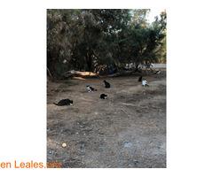 Alimentos para 40 gatos y camello - Imagen 1