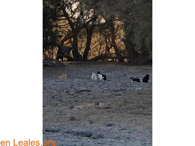 Alimentos para 40 gatos y camello - 2