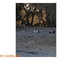 Alimentos para 40 gatos y camello - Imagen 2
