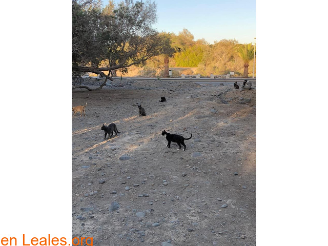 Alimentos para 40 gatos y camello - 3