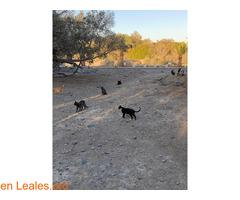 Alimentos para 40 gatos y camello - Imagen 3