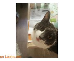Ayuda gatos refugio y colonias melyta