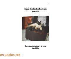 Un Gato de 1 año, se llama Coco - Imagen 2