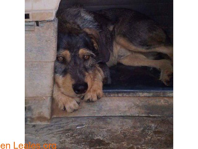 Romeo en adopción SOS Sagunto