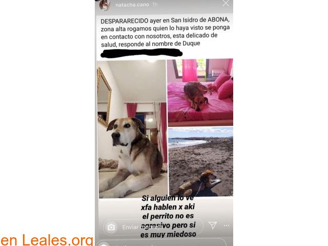Perro pedido en San Isidro