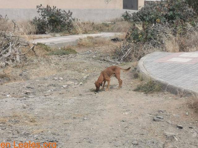 Cachorro - 1