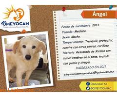 ANGEL - Imagen 1