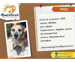 ANDY - Imagen 1