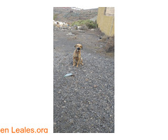 Visto en Telde  - Imagen 3