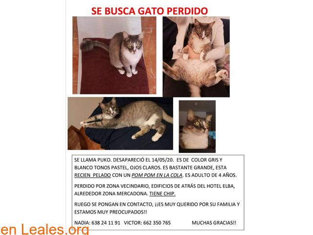GATO PERDIDO,PUKO,VECINDARIO,LAS PALMAS - 7
