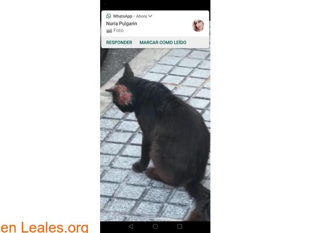 Ayuda para rescatarlo en Las Palmas GC - 1