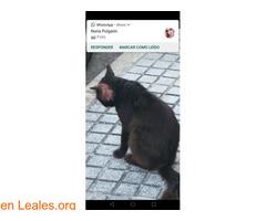 Ayuda para rescatarlo en Las Palmas GC