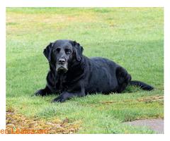 Desconfinamiento saludable para mascotas