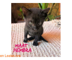 Maat - Imagen 2