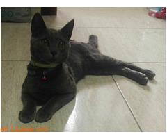 URGENTE* Gato encontrado. - Imagen 2