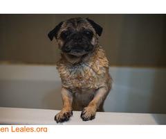 Los mejores consejos de baño para perros