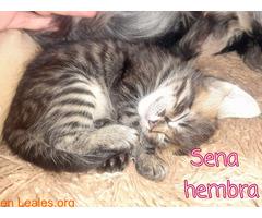 Sena - Imagen 5