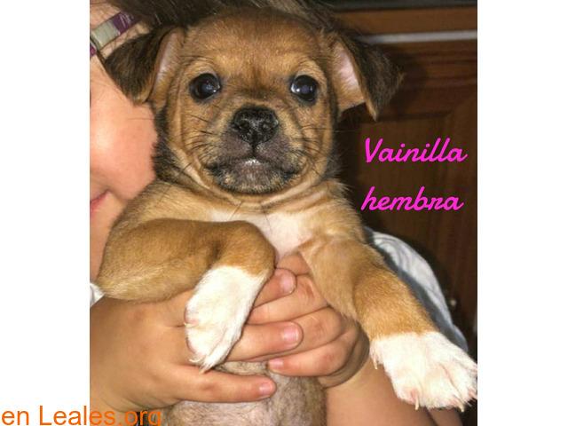 Vainilla - 2