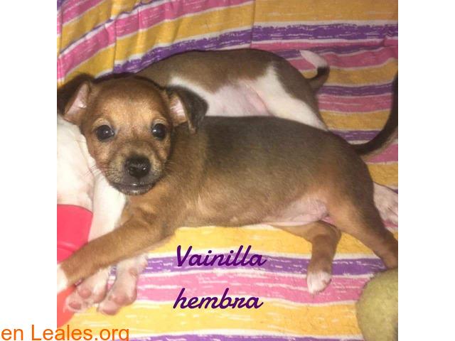 Vainilla - 4
