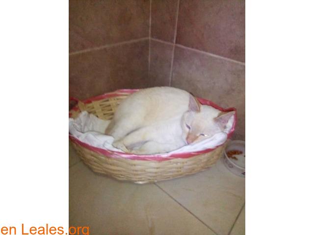 Gatito adulto busca un hogar  - 3