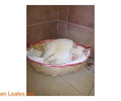 Gatito adulto busca un hogar  - Imagen 3