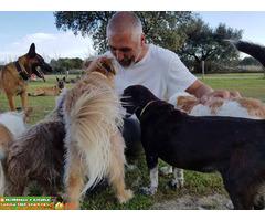 Residencia Escuela Canina Pico Chaparral - Imagen 1