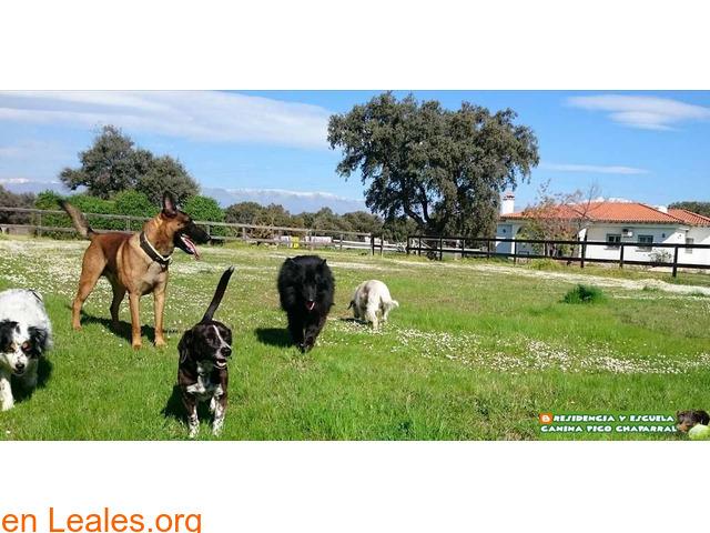 Residencia Escuela Canina Pico Chaparral - 2
