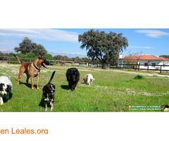Residencia Escuela Canina Pico Chaparral - Imagen 2