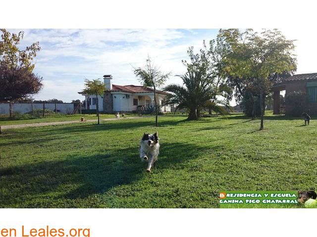 Residencia Escuela Canina Pico Chaparral - 4