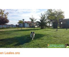 Residencia Escuela Canina Pico Chaparral - Imagen 4
