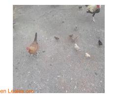 No tengo para alimentarlos, ayuda - Imagen 3