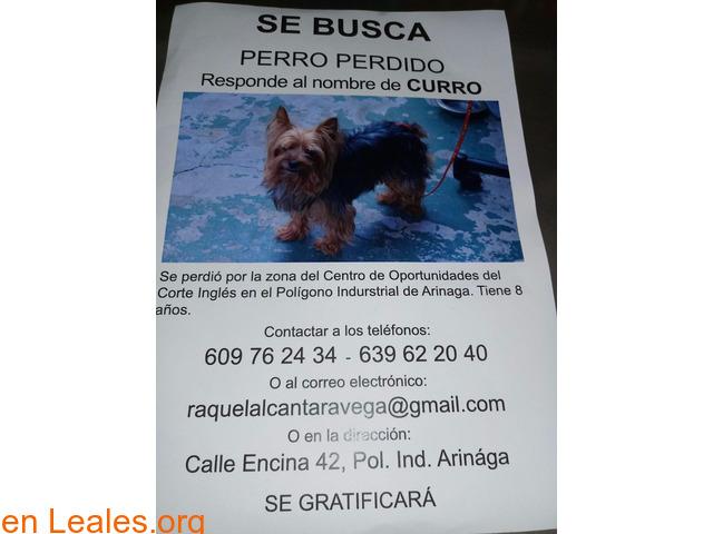 Curro se perdió