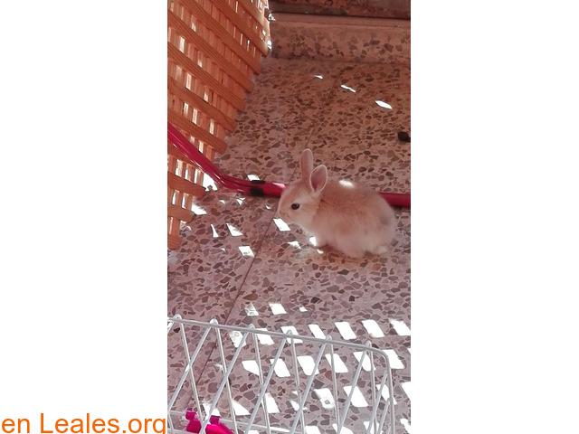 Conejitos ya adoptados - 2