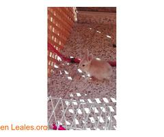 Conejitos ya adoptados - Imagen 2
