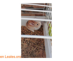 Conejitos ya adoptados - Imagen 4