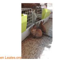 Conejitos ya adoptados - Imagen 6