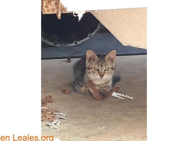 Dos gatitos, macho y hembra +gata adult