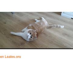 Gato macho en adopción - Imagen 1