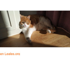 Gato macho en adopción - Imagen 2