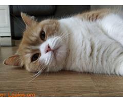 Gato macho en adopción - Imagen 4