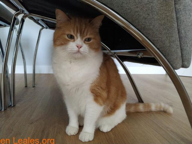 Gato macho en adopción - 6