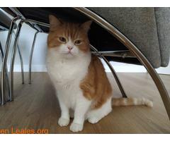 Gato macho en adopción - Imagen 6
