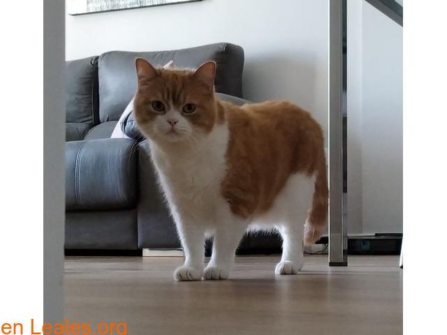 Gato macho en adopción - 7